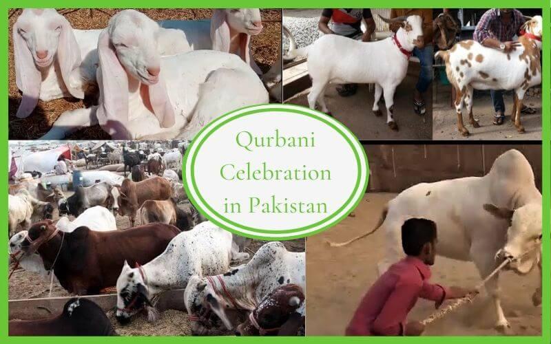 Qurbani Celebration in Pakistan