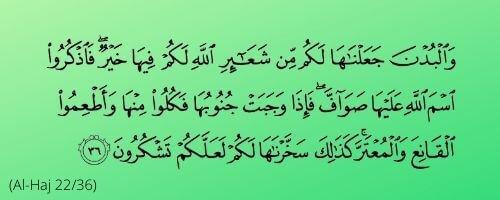 qurbani-in-hadith